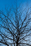 Tree. Dry trees are to day Royalty Free Stock Images