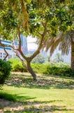 Tree in Dubai. Garden and Lake in Dubai Stock Images