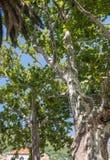 Tree in Dubrovnik Stock Photo