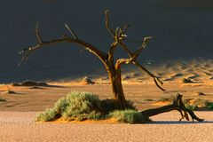Tree and dune Royalty Free Stock Photo