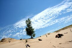Tree in dune. Tree in sand dune with blue ski and clouds Royalty Free Stock Photo