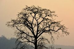 Tree at dusk royalty free stock image