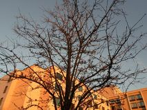 Tree, South Bay Center, Dorchester, Massachusetts, USA. Tree at dusk in front of a building, located near South Bay Center, in Dorchester, Massachusetts, USA Stock Images