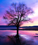 Tree dusk silhouette Royalty Free Stock Photo