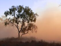 Tree in dust Royalty Free Stock Images