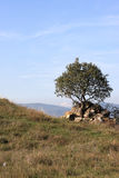 Tree on dzhvari hill Stock Image