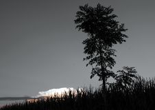 Tree. Early evening in landscape with tree royalty free stock images