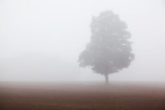 Tree in early morning fog Royalty Free Stock Photo