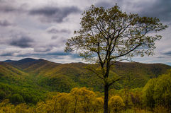 Tree and early spring view of the Blue Ridge  in Shenandoah National Park, Virginia. Stock Photography