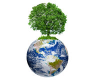 Tree on Earth. Isolated on white (Earth image courtesy of NASA royalty free stock photography