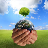 Tree on the earth. In hands concept,elements of this image furnished by NASA Stock Images