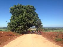 Tree in a earth road win cyclists under Stock Images
