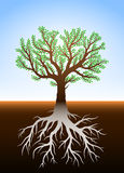 Tree in earth and its roots. Tree in earth illustration with green leaves and roots Stock Photography