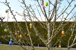 Tree Easter eggs. How to make an easter egg tree Stock Images