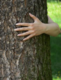 Tree and ecology. Female hand embracing tree royalty free stock photography
