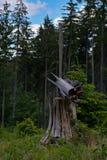 Tree, Ecosystem, Wilderness, Nature Reserve