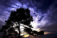 Tree of Eden. This is a tree that guards some of the coast of Norway Stock Photos