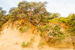 Tree on the edge of the abyss Stock Photography