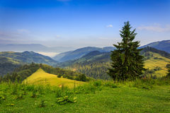 Tree on the edge of clearing in mountains Stock Image