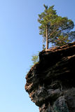 Tree on edge of cliff. Low angle view of solitary tree on edge of cliff, blue sky background Stock Image