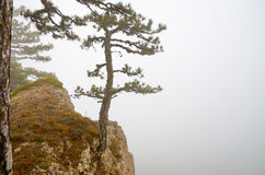 A tree on the edge of a cliff in the fog. stock photos