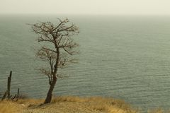 A look of loneliness to infinity. Tree on the edge of a hazard. observing the horizon Stock Photos