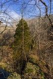 Tree on the edge. Stock Photo