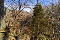 Tree on the edge. Royalty Free Stock Photography