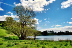 Tree by the edge of Loughrigg Tarn. Picturesque view of a tree on the grassy shore of Loughrigg Tarn in the English Lake District on a glorious summer day Royalty Free Stock Photo