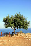 Tree on edge of Mediterranean Stock Photos