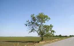 Tree on the edge of the road Royalty Free Stock Images
