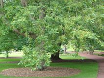 Tree. From Edinburgh's botanics. There are also benches stock photo