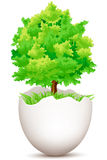 Tree on egg Royalty Free Stock Images