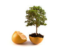 Tree  in egg shell Royalty Free Stock Image