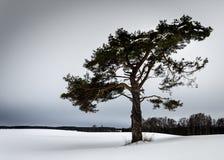 Tree2 lizenzfreie stockfotografie