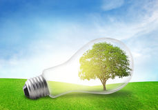 Tree in electric bulb on grassland. Eco energy concept. Stock Images