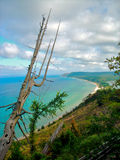 Tree at Empire Bluffs Royalty Free Stock Photography