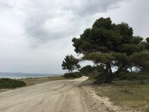 tree on empthy road Royalty Free Stock Photos