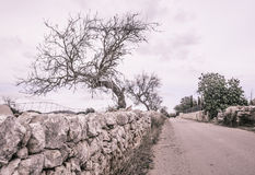 Tree empty country road Mallorca. In October. Outside Santanyi, Mallorca, Balearic islands, Spain in October Royalty Free Stock Photo