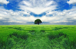 Tree in the endless field royalty free stock photo