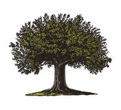 Tree in engraving style Royalty Free Stock Photography