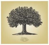 Tree in engraving style. Vector illustration of a fruit tree in vintage engraving style. Isolated, grouped, transparent background Royalty Free Stock Image