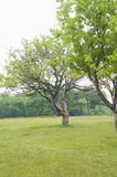 Tree. Enjoy the natural green grass green Stock Images