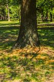 The tree enjoys the silence of the park. And around it the grass grows and enjoys the warmth of the sun Stock Images