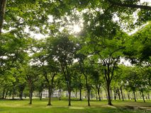 Tree Environment in park. Tress in the park with sun rise stock image