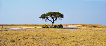 Tree in Etosha National Park. Etosha National Park is a national park in northwestern Namibia Royalty Free Stock Photography