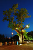 Tree at evening Stock Photos