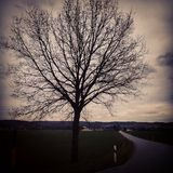 Tree. In the evening Royalty Free Stock Photo
