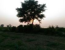 Tree in evening. Stock Photography