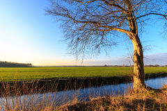 A tree in evening glow in the countryside Royalty Free Stock Images